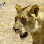 Turismo responsabile, safari al Parco Ruaha